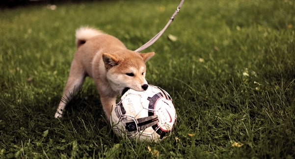 hundespielzeuge tipps