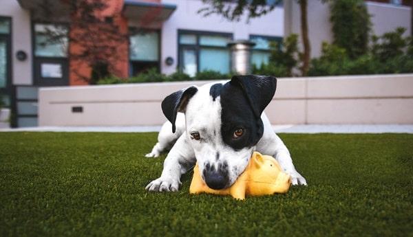 Spielzeuge Für Hunde Gegen Langeweile: Empfehlungen