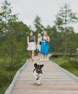 hund in den urlaub mitnehmen