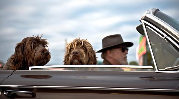 verreisen mit hund tipps