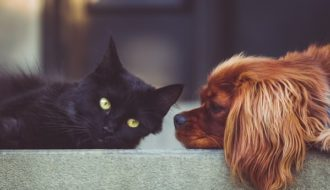 hund und katze anfreunden
