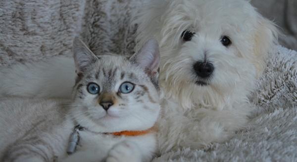 hund und katze zusammenführung