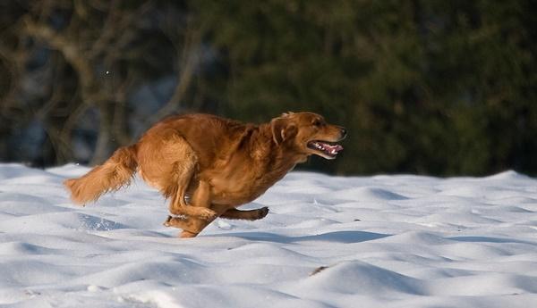 Hunde Antijagdtraining / Impulskontrolle Trainieren