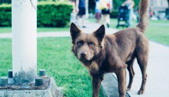 Mein Hund Ist Aggressiv: 6 Wichtige Tipps