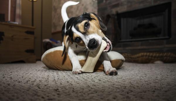 10 Hundeerziehung Fehler Vermeiden