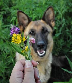 Unsere Empfehlung: mit Johanna Essers Online Trainingsprogramm nehmen Sie die Abkürzung für eine ideale Erziehung Ihres Hundes…